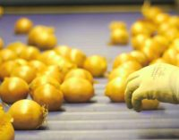Produce World Group in Strong Position For the Future