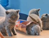 United Biscuits Re-launches McVitie's Brand