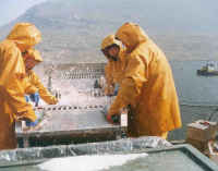 Irish Seafood Sector Has Huge Potential For Growth