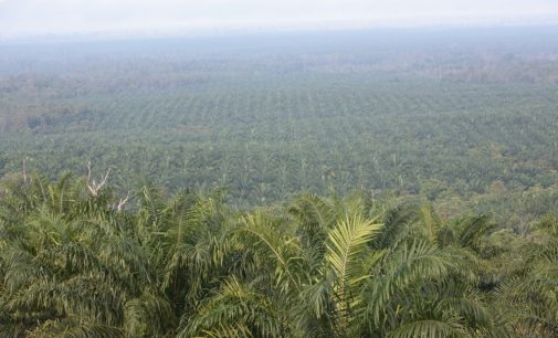 Shared Responsibility of Certified Sustainable Palm Oil to be Discussed at RSPO Conference – London, June 4th 2014