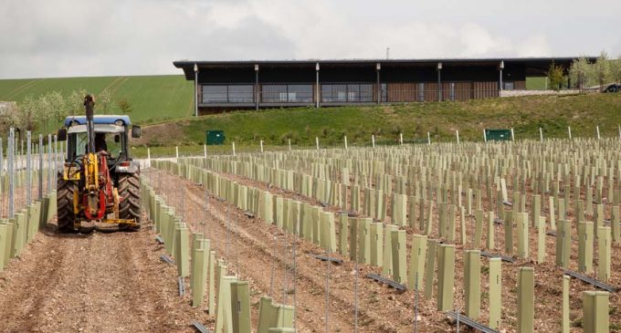 UK's Largest Winery Opens