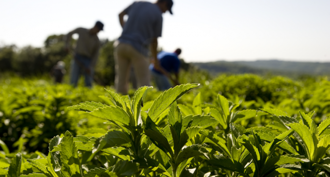 Truvia Sweetener Meets Sustainability Goals Ahead of Time