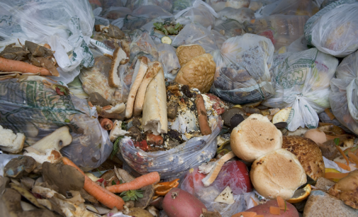 New Insights Help Industry Target Household Food Waste Reduction