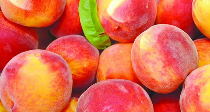 Exceptional Measures to Assist Peach and Nectarine Producers
