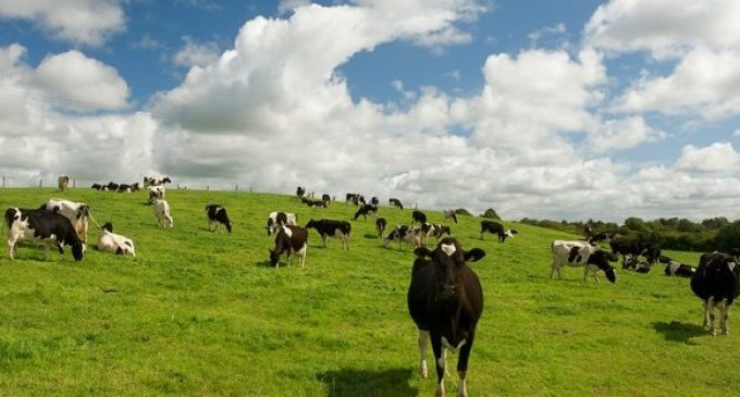 European Emergency Market Support Measures For Dairy Sector