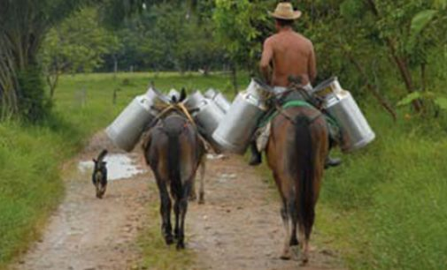 Nestlé to Increase Milk Output in Mexico
