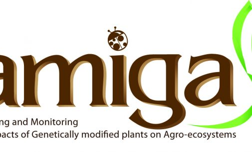 AMIGA Project at its Last Stage in Study of GM Plants